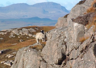 Local inhabitant of Raasay